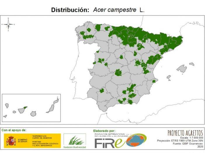 Mapa de Distribución de Acer campestre