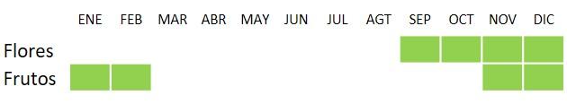 Calendario de floración y fructificación de Arbutus unedo
