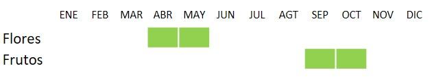 Calendario de floración y fructificación de Malus sylvestris