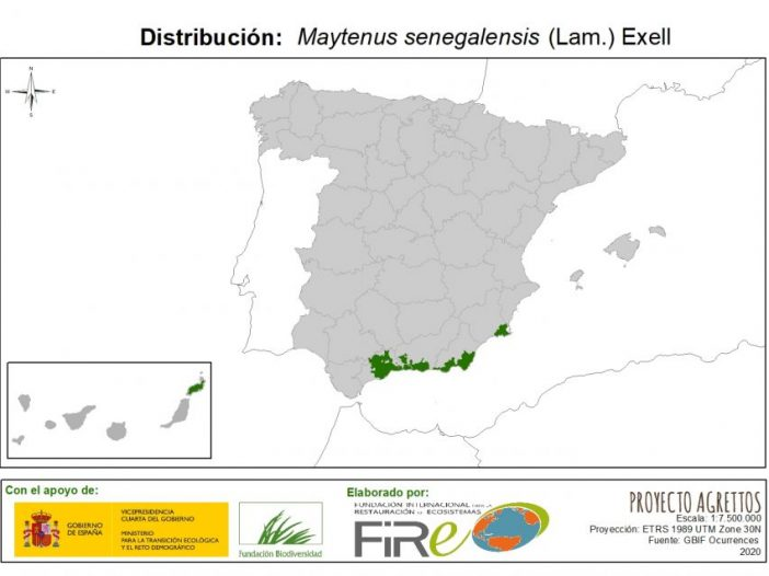 Distribución de Maytegus senegalensis (Lam.) Loes.