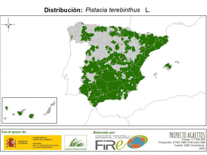 Mapa de distribución Pistacia terebinthus L.