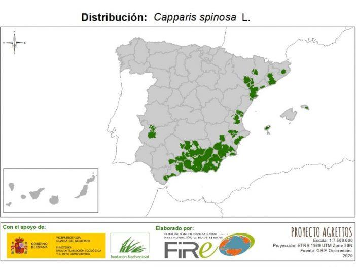 Mapa de Distribución de Capparis spinosa
