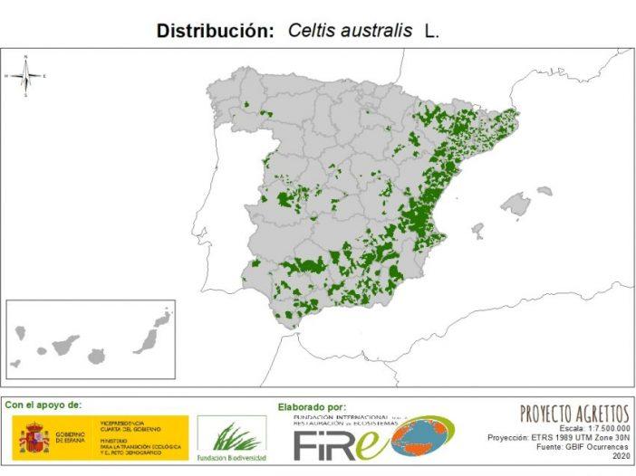 Mapa de Distribución de Celtis Australis