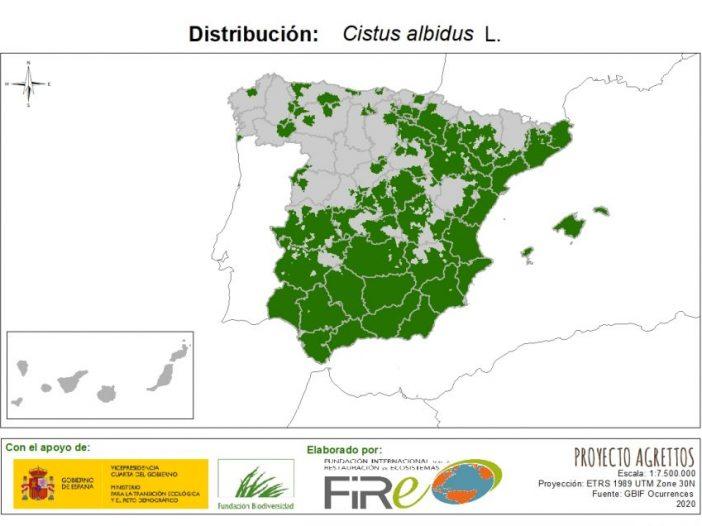 Mapa de Distribución de Cistus albidus L.