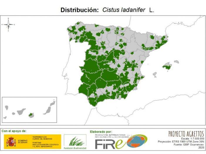 Mapa de distribución de Cistus ladanifer L.