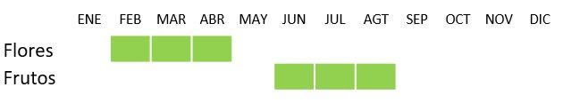 Calendario Buxus sempervirens