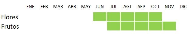 Calendario de floración y fructificación de Capparis spinosa
