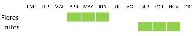 Calendario de floración Celtis australis L.