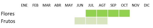 Calendario de floración y fructificación de Ceratonia Siliqua L.