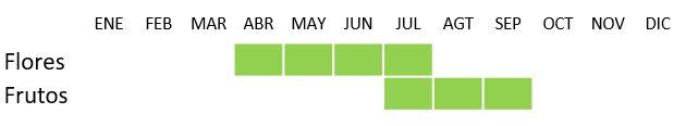 Calendario Thymus mastichina