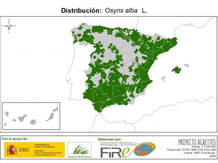 Mapa de distribución Osyris alba L.