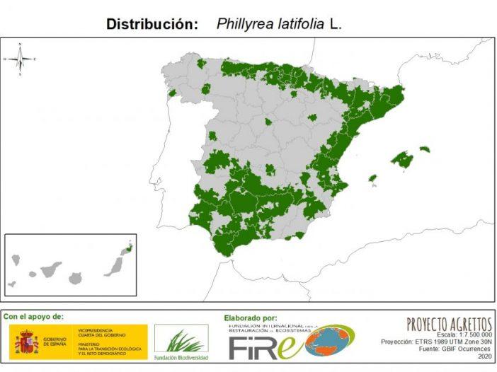 Mapa de distribución Phillyrea latifolia L.
