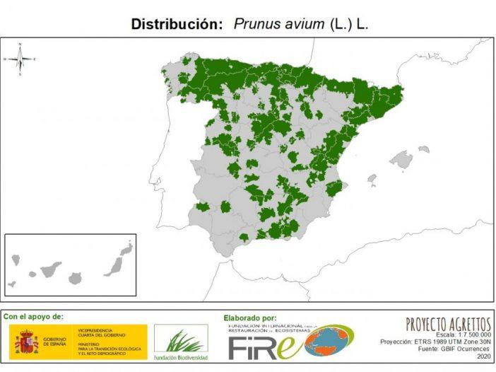 Mapa de distribución Prunus avium (L.) L.
