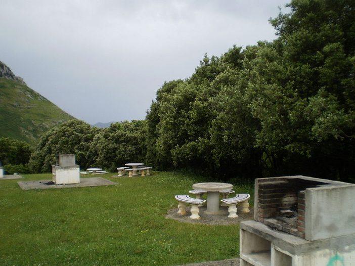 Porte Quercus ilex subsp. ilex L.