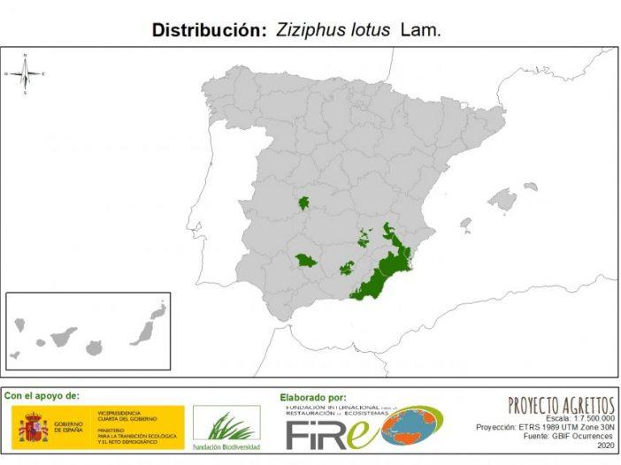 Mapa de distribución de Ziziphus lotus Lam.