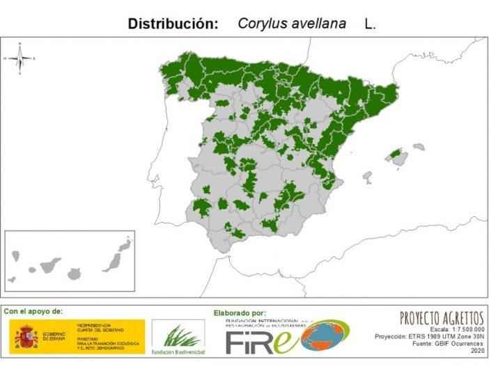 Distribución de Corylus avellana L.