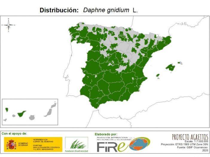 Distribución de Daphne gnidium L.