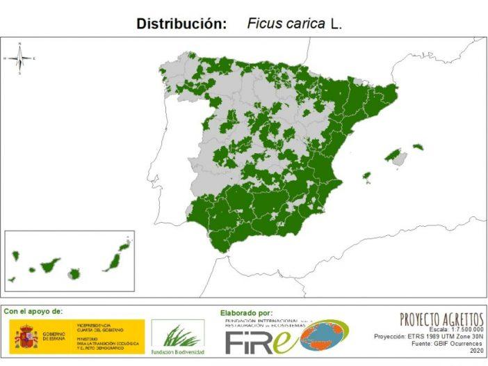 Mapa de distribución de Ficus carica L.