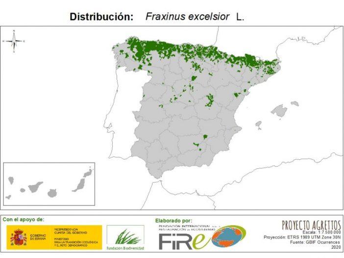 Mapa de distribución de Fraxinus excelsior L.