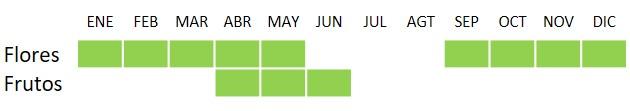 Calendario Periploca laevigata Ait.