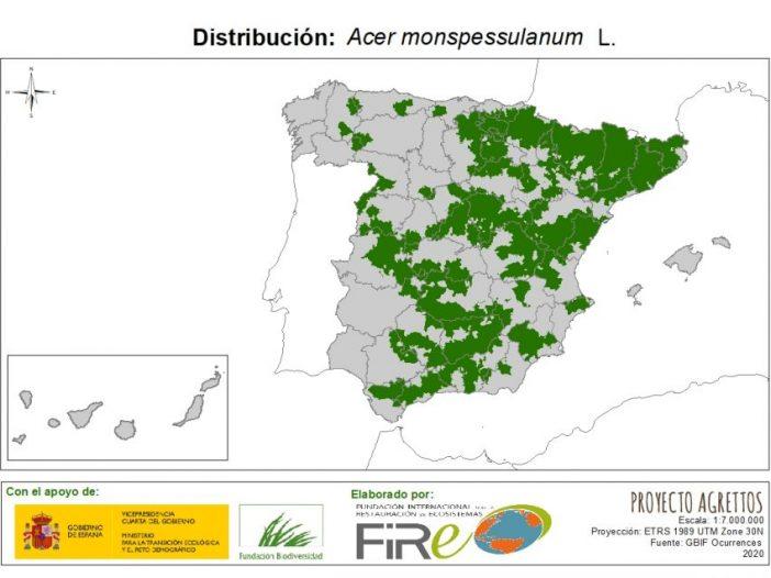 Mapa de distribución Acer monspessulanun L.