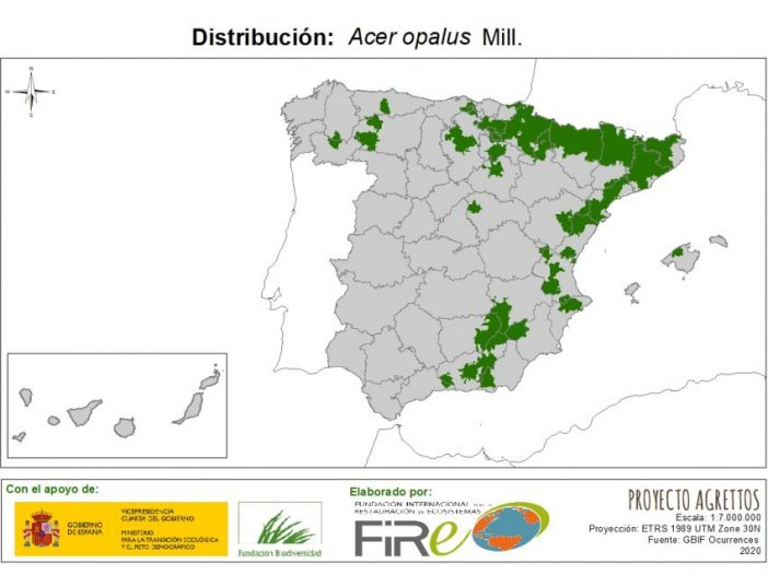 Mapa de distribución Acer opalusMill.