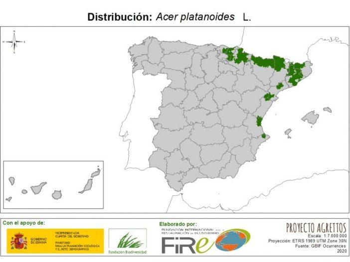 Mapa de distribución Acer plataniodes L.