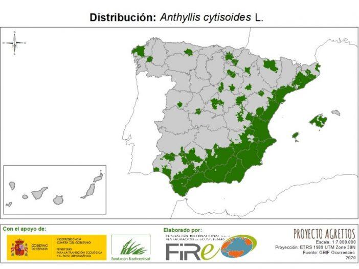 Mapa de Distribución Anthillys cytisoides
