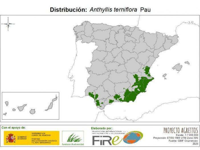 Mapa de distribuciónAnthyllis terniflora Pau