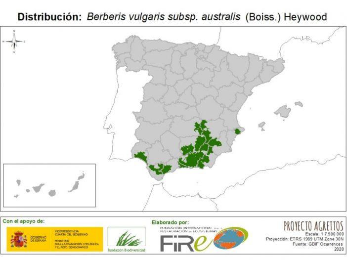 Berberis vulgarissubsp.australis(Boiss.) Heywood