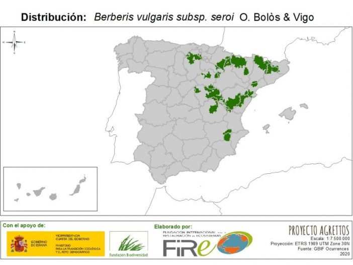 Berberis vulgarissubsp.seroiO.Bolòs & Vigo