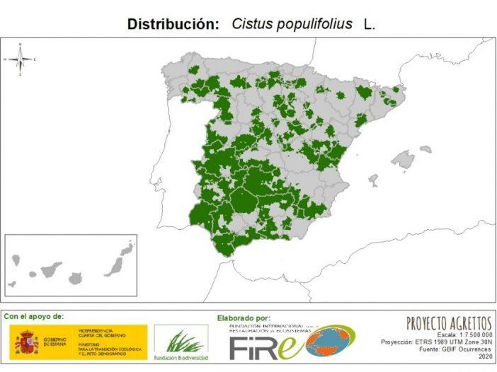 Mapa de distribución Cistus populifolius L.
