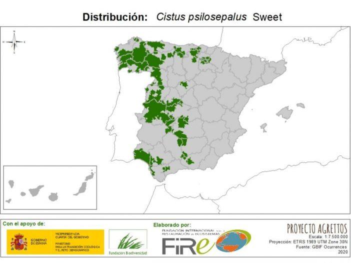 Mapa de distribución Cistus psilosepalus