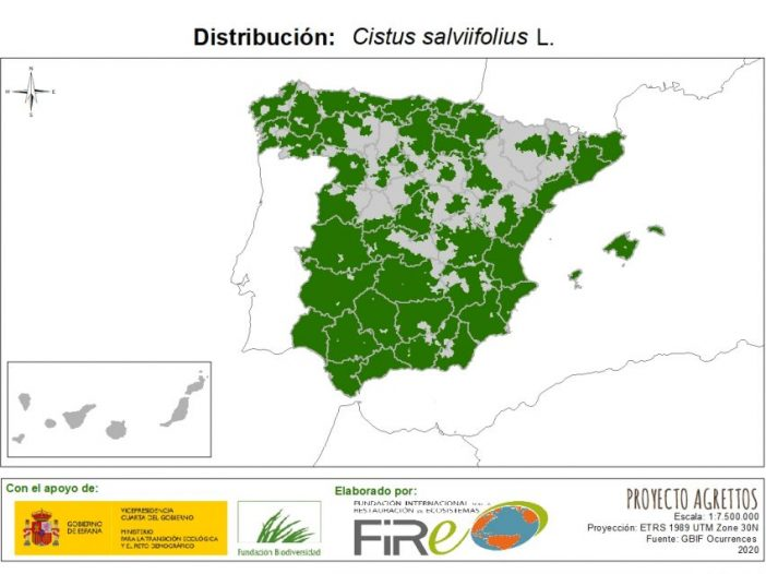 Mapa de distribución Cistus salviifolius