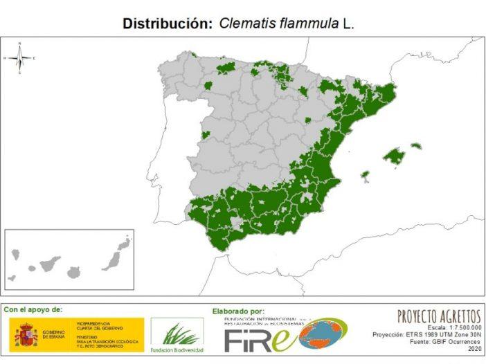 Mapa de distribución Clematis flammula