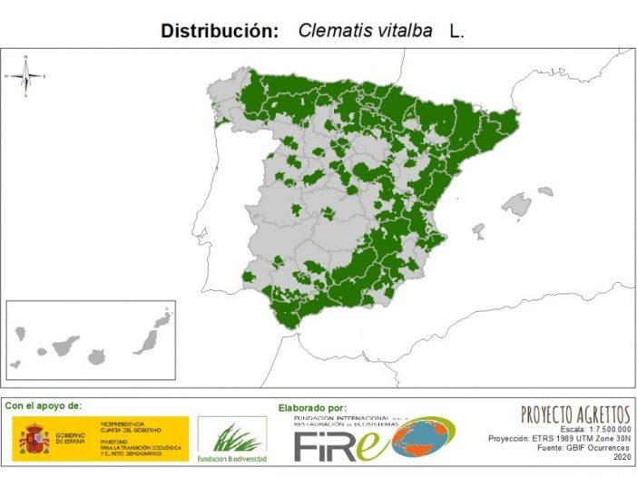 Mapa de distribución Clematis vitalba