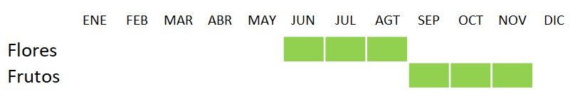 Calendario Clematis vitalba