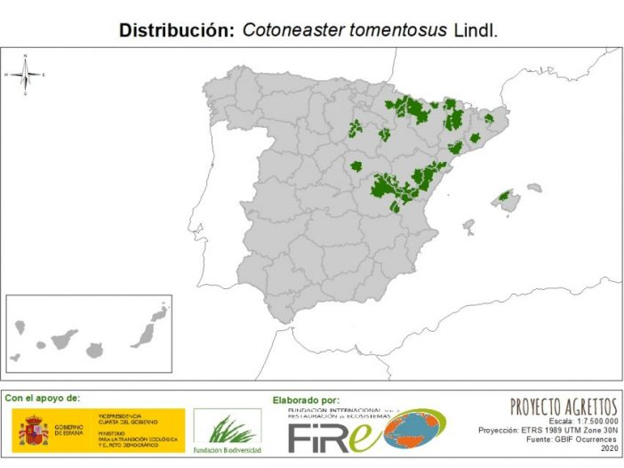 Mapa de distribución Cotoneaster tomentosus