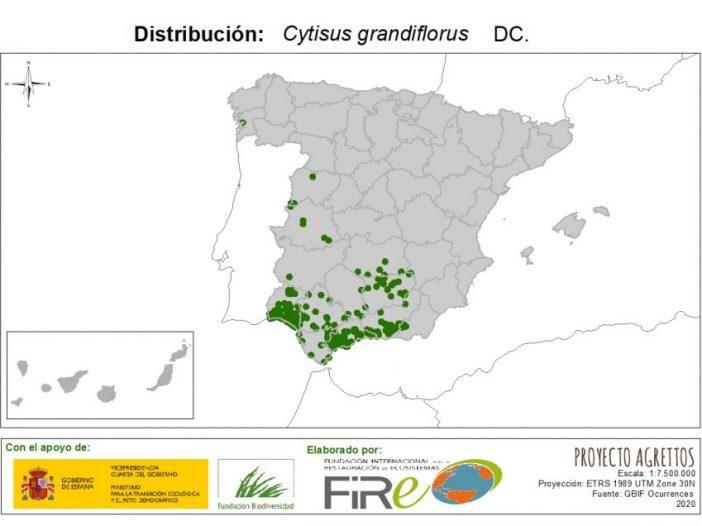 Mapa de distribución Cytisus grandiflorus