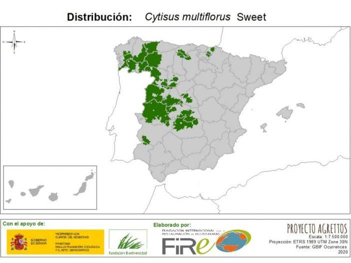 Mapa de distribución Cytisus multiflorus