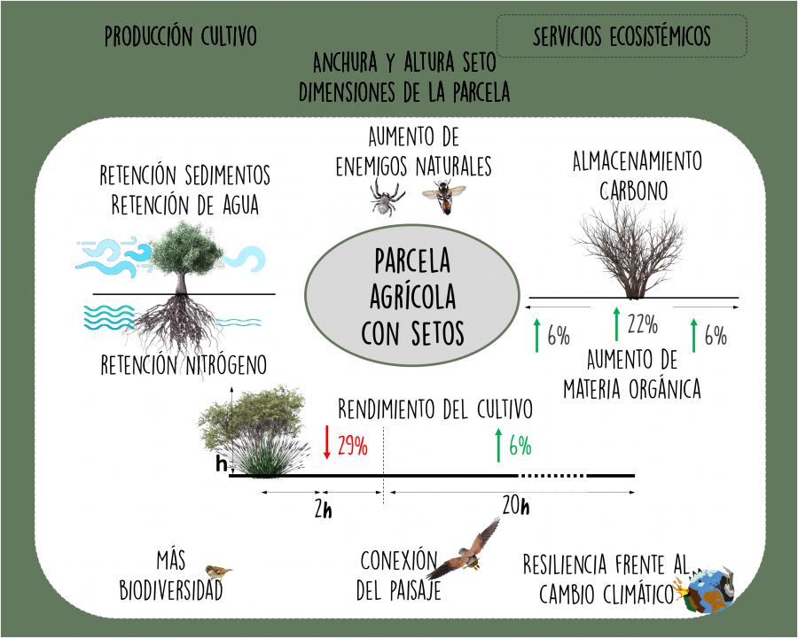 Beneficios de los setos en parcelas agrícolas